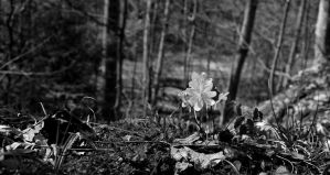Rue Anemone on the Edge of the Hill by AlgeriArts