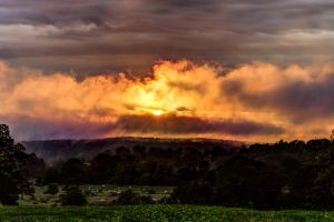 Moo Cows and a Shy Sun by matthewfoxxphotos