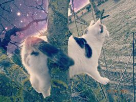 Space Cat by paula-the-cat