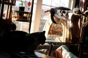 Cats and Sunbeams by Snord-Art
