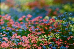 The Field of Flowers by Worldisntgood