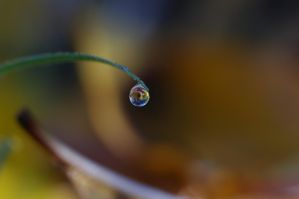 Water drop by Althalore