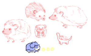 Hedgehog Sketches by ArtBeginsHere