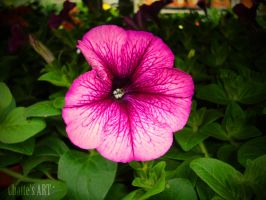 Pink veins. by ChatteArt