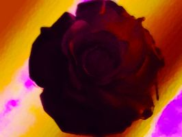 Mulberry Vermilion Rose by DMWVCS