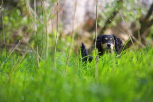 Timi in the grass by luka567