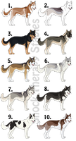 Point Auction - Siberian Huskies 3 CLOSED by ShockTherapyStables