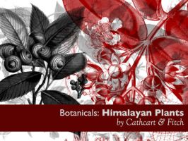 Botanicals 6 - Himalayas by remittancegirl