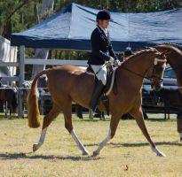 STOCK Canungra Show 2013-74 by fillyrox