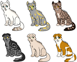 American Curl/Scottish fold Adopts by Dreaming-of-wonder