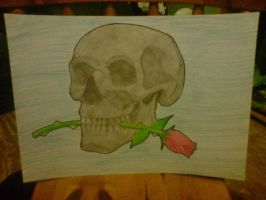 Skull and a Rose by ShawnJames94
