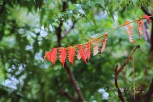 Red Among Green by thebreat