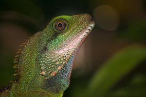 Another shot of the green lizard by WhiteCatFoto