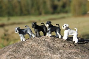 Miniature Schnauzers - FOR SALE by Deseo91