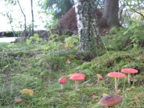 Fly agaric I by mieliliito
