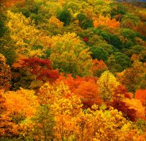 Fall valley, full image.img614 by harrietsfriend