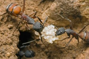 ants working by buleria