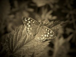 SEPIA BUTTERFLY #1 by ANDYBURGESS