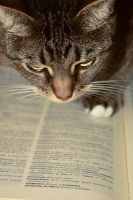 Knowledge - By hateous by photohunt