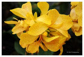 Tropical Yellow by erbphotography