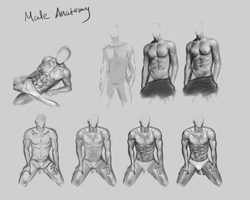 Male anatomy practice by CitrusGun