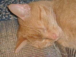 Sleeping Cat Stock 8 by Orangen-Stock