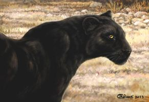Black Leopard by Bisanti