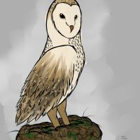 Owl by Xx-Lord-V-xX