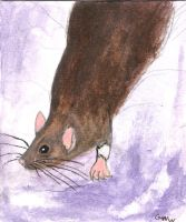 Agouti rat by Ratstien