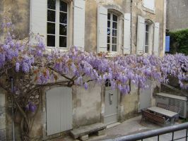 WISTERIA HOUSE IN EYGALIERES by isabelle13280