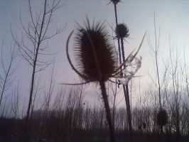 seed pod by librarian-of-hell