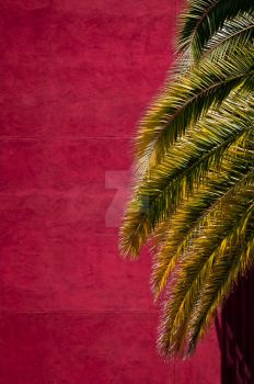 Hollywood and Palm by MarkHiEnglert