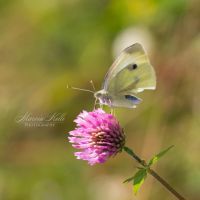 Happy Butterfly by LastingMemor1es