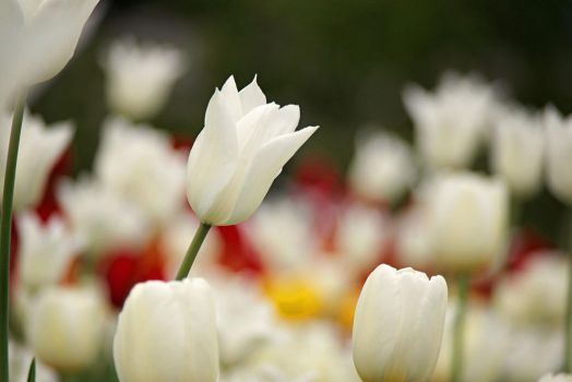 White3 by Eriin-Emely