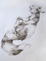 Black and White Furret by Silverbirch
