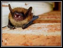 Bat, Bat, fly into my hat... by scub