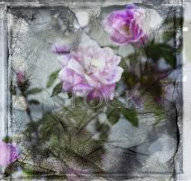 Textured-Rose-3 by Evil-e33