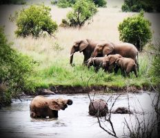 Elephant Family by LS-Coloringlife