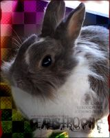 I.D. - The Mome Rath Bunny by Peristrophe