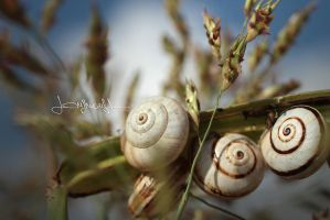 Snails.. by lorymaryb
