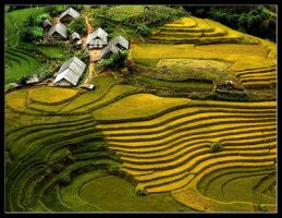 Terraced fields. by letuananh