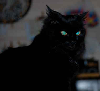 Black cat equals Unhappy by Lord-Quake666