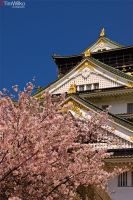 Hideyoshi's Castle by Tim-Wilko