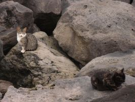 Two cats resting on rocks near the beach arena by Natalia-Clark