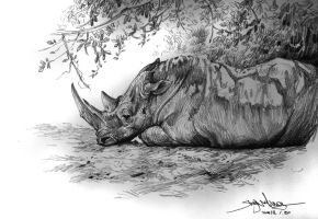 White Rhino by banhatin