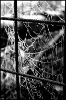 Spiderweb by ruudjunk