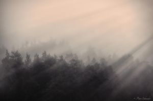 Morning mist (II). by Phototubby