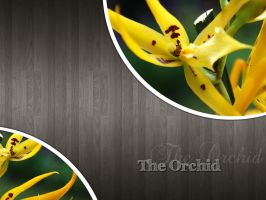 The Orchid by jojosangm