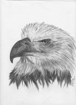 Just a quick freedom sketch by yoyieez