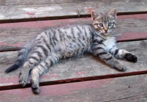 Stripey stretch by Ripplin